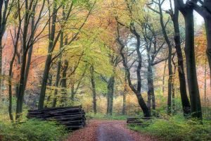Autumn Forrest by 00Michael00A