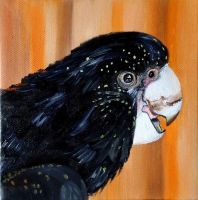 Black cockatoo by WendyMitchell
