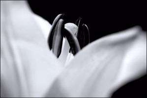 White Flower In Black by AbstractDr3ams