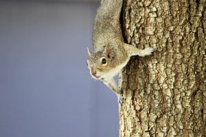 Squirrel by winterface