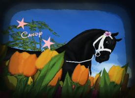 Candy in tulips by Horse-Rider101