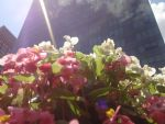 Flowers in NYC! by salemshot