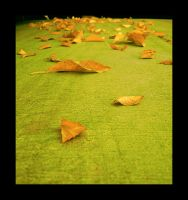 The leaves autumn, or fall by Chexee