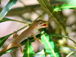 Baby Anole by FallOut99