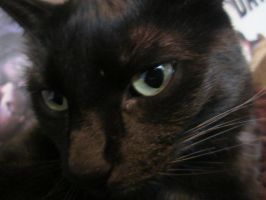 Phoebe, My Cat by AnnabellLee666