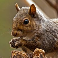 Squirrel claws by MichelLalonde
