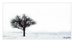 Lonely winterdance by SmartyPhoto
