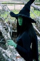 The Wicked Witch of the West by Mad-Tea-Party-Prodn