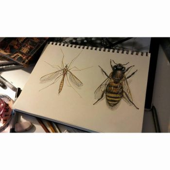 Mosquito and honey bee by ezgicelep