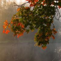 Autumn Light by Photopathica