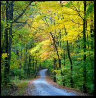 Bean Blossom road 2/3rd fall.img571 by harrietsfriend