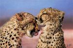 Cheetahs by CUMMINGSart