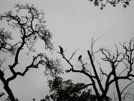 silhouettes 01 by Treeclimber-Stock