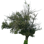 tree 11 png by gd08