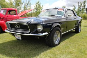 Mustang For Sale by KyleAndTheClassics