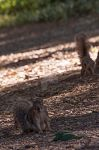 Squirrels at the UCD Aboretum by NBrownPhotography