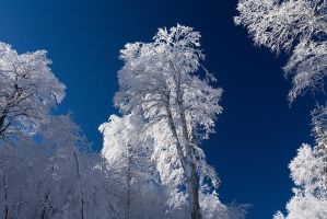 Frozen candy by vincentfavre