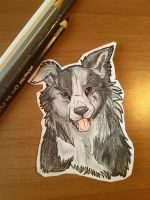 Border collie in pencils by Sihir-Wazi