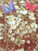 Butterfly Daisies by webgoddess