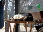 Content much? by Shewen