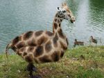 Giraffe Duck by MasterGnu