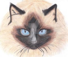 Siamese Cat by PlatinumxRose