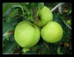 Apple Trio by picworth1000wrds