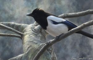 Magpie in light by makangeni