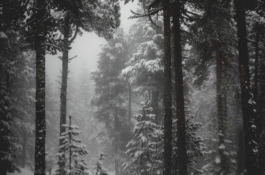 Wintry Grey by alexandre-deschaumes
