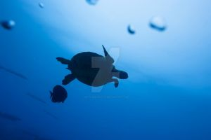 Turtle by MotHaiBaPhoto