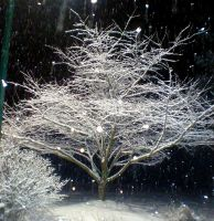 Frozen Tree by CitrineNightmare90