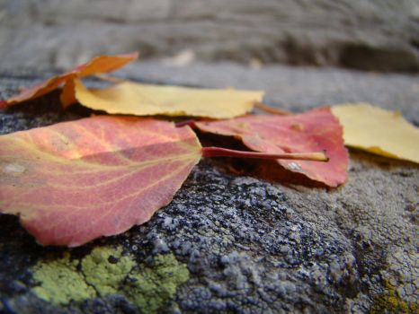 fall leaves by Artsly