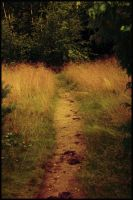 Summer path HD by pmattiasp