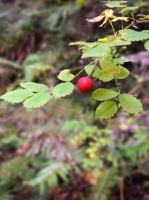 A lone little berry. by kath660