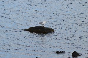 Seagull on the rocks 3 by The-DemonWolf