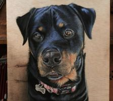 Harley-Quinn.Rottweiler drawing. by ivanhooart