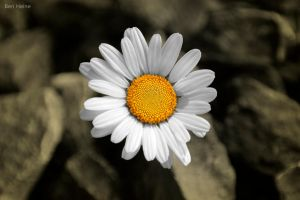 There is a Sun in Every Flower by BenHeine