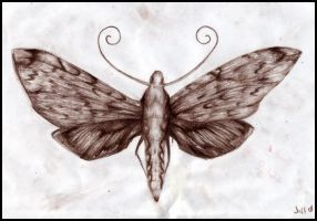 moth by Jillyfish
