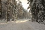 Road to winter wonderland by MFserver