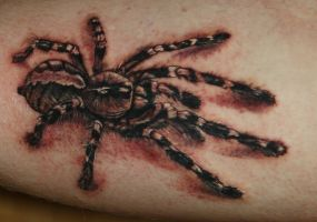 Spider Tattoo by Natissimo