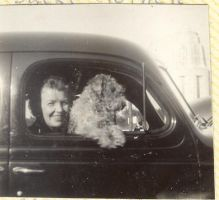 Dog and lady in car by Glo-Stock-Vintage