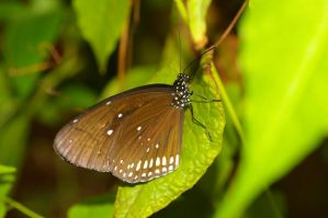 Brown Butterfly by PatGoltz