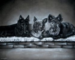 Tammy's Scotties - Charcoal Commission by secrets-of-the-pen