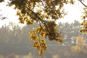 Autumn 2012 by frits10a