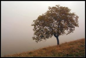 Lonely Autumn by medveh