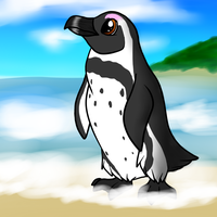 South african penguin by Enricthepenguin92