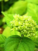 The Tiniest of Green by Oinkment