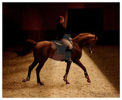 dressage 10 by paula2206-photo