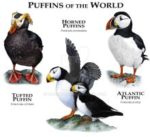 Puffins of the World by rogerdhall