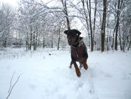 Ares in the snow by faithandfreedom
